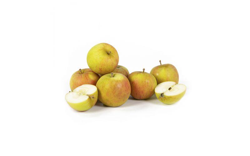 Heirloom Holstein Apples