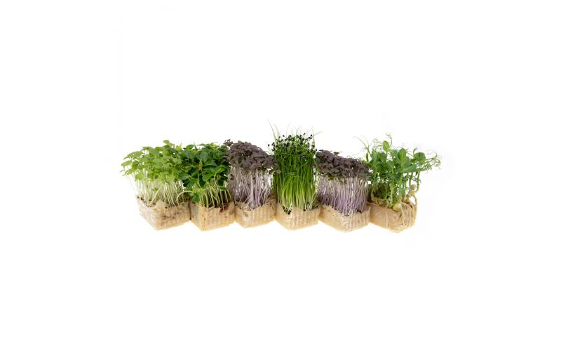 Sakura Mix Living Cress