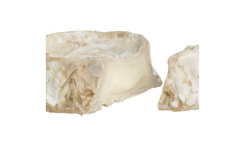 Goat's Milk Camembert Cheese