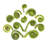 Wild Fiddlehead Ferns