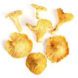 Wild Chanterelle Mushrooms