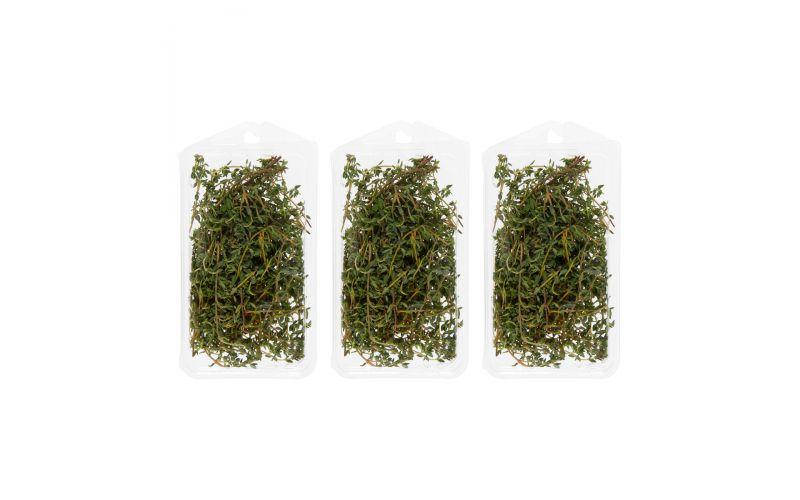 Organic Thyme