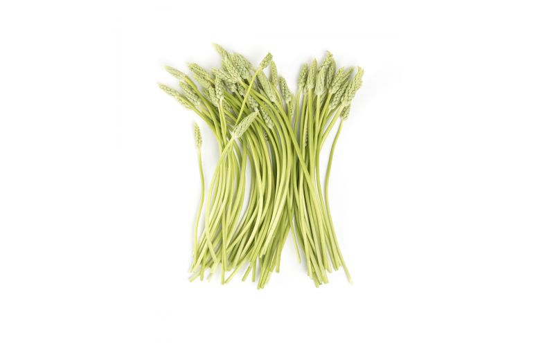 Wild French Asparagus