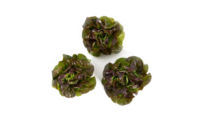 Bronze Little Gem Lettuce