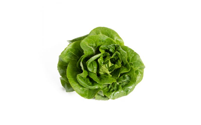 Green Little Gem Lettuce