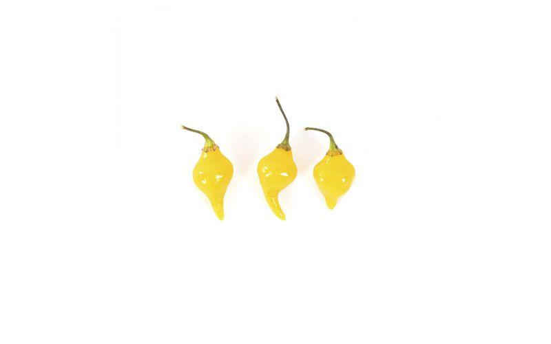 Organic Biquinho Yellow Peppers
