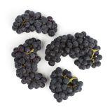 Organic Purple Mars Grapes