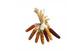 Mini Ornamental Corn