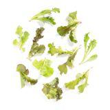 Mini Mix Lettuce