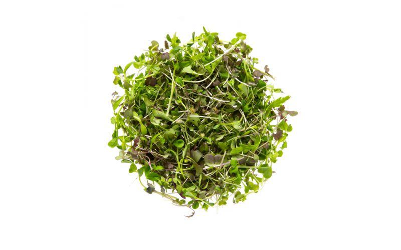 Organic Micro Asian Blend