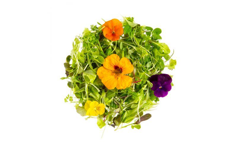 Organic Micro Lettuce Entertain You Blend