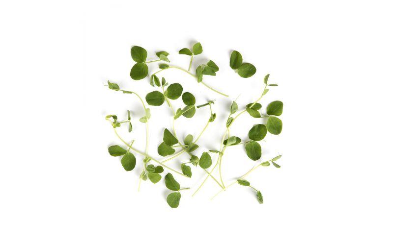 Organic Micro Pea Tendrils