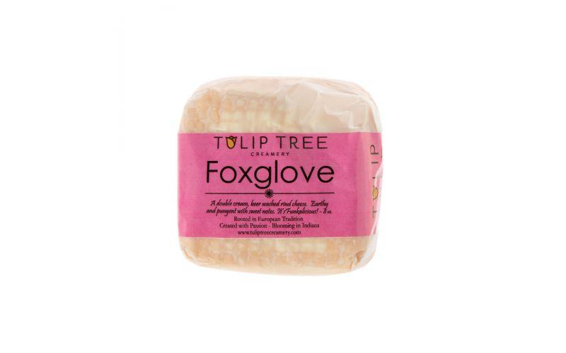 Tulip Tree Foxglove