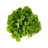 Organic Oak Leaf Green Lettuce