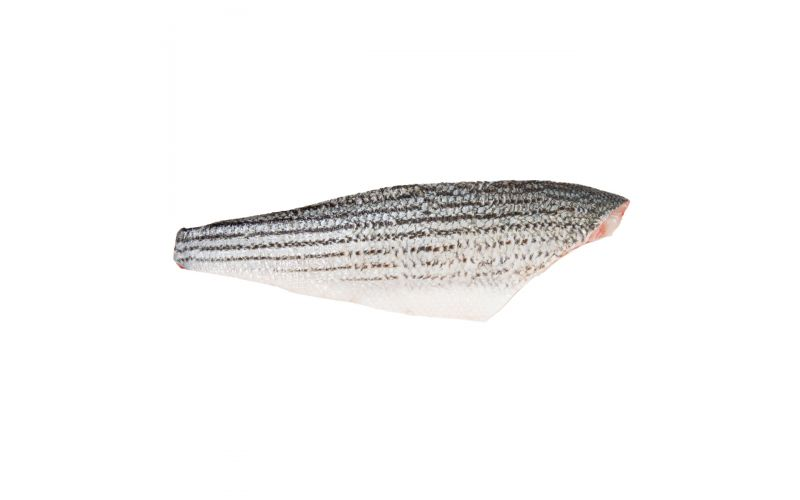 Wild Striped Bass Side 4-6 LB
