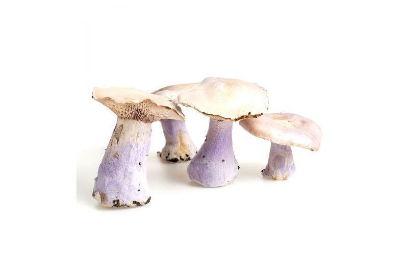 Bluefoot Mushrooms