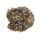 Extra Large Maitake/Hen of the Woods Mushrooms
