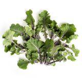 Lollipop Kale Sprouts