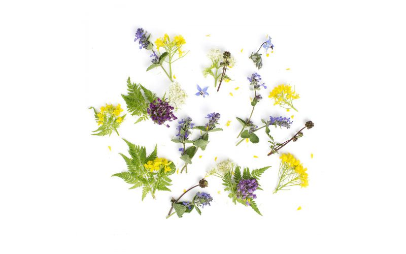Herb Flower Mix