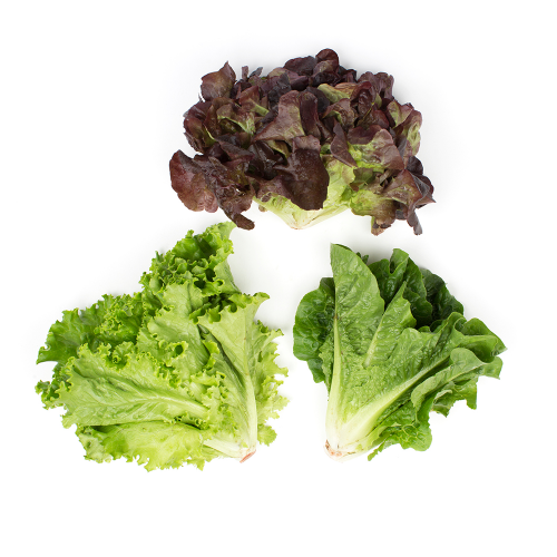 Organic Baby Mixed Lettuce Heads