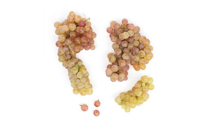 Bronx Grapes