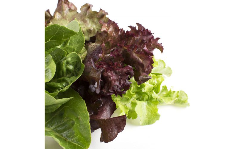 Transitional Ultra Baby Mix Lettuce
