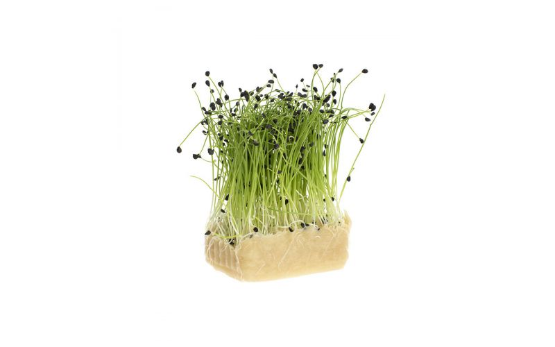 Rock Chives Living Cress